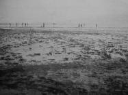 Sakupljanje riba u plićaku mjesec dana nakon isušivanja Čepićkog jezera početkom 1933., u Consorzio di bonifica del sistema dell'Arsa, Labin 1934.g., 31