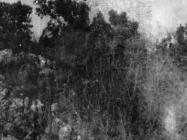 Pogled na kulu Turan s istoka početkom 50-ih godina, Koromačno. (fn. 767) Iz arhive Arheološkog muzeja Istre