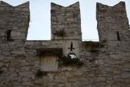 Gradske zidine, grb. Novigrad. Autor: Aldo Šuran (2009.)