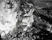 Vanjsko lice apside s lezenom, crkva Svetog Nikole 1955. godine, Banjole. (bn. 3061, bp. 3050) Iz arhive Arheološkog muzeja Istre