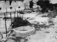 Antička kamenica sekundarno upotrijebljena za pojenje stoke u staroj Barbarigi početkom 50-ih godina, Barbariga. (bn. 2255, bp. 2457) Iz arhive Arheološkog muzeja Istre