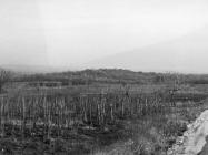 Pogled na gradinu Kaštel kod Červara 1975. godine, Červar. (fn. 13604) Iz arhive Arheološkog muzeja Istre