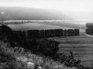 Pogled prema položaju ulaza u Pećinu kod Krasice krajem 80-ih, dolina Rijeke Mirne. (fn 23434.) Iz arhive Arheološkog muzeja Istre