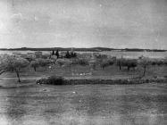 Pogled na Fažanu s istoka sredinom 50-ih godina, Fažana. (bn. 3242). Iz arhive Arheološkog muzeja Istre